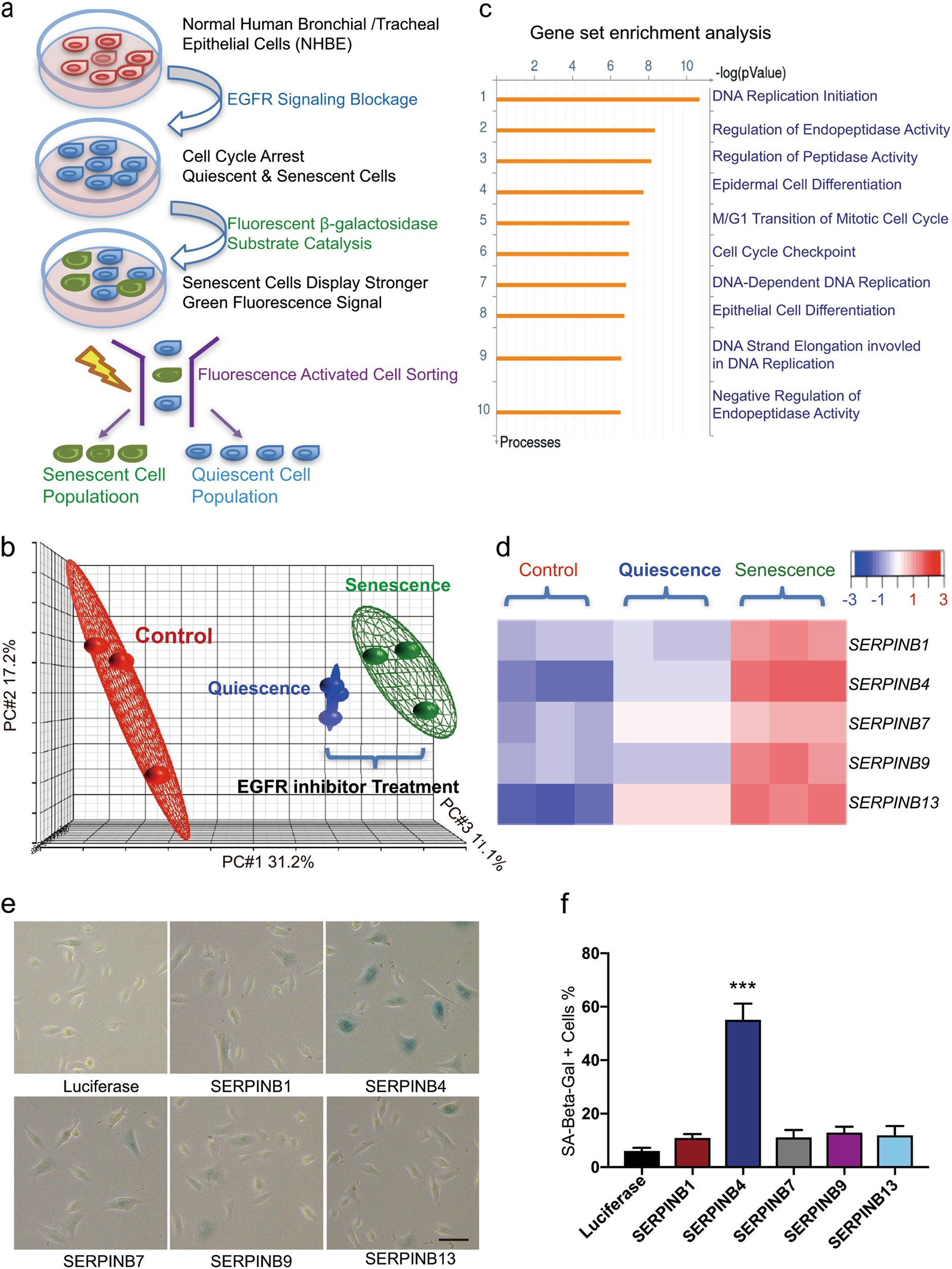 Switching Off Immp2l Signaling Drives Senescence Via Simultaneous If You Tip The Camera Over This Fully Exposes Flash Circuit Metabolic Alteration And Blockage Of Cell Death Research