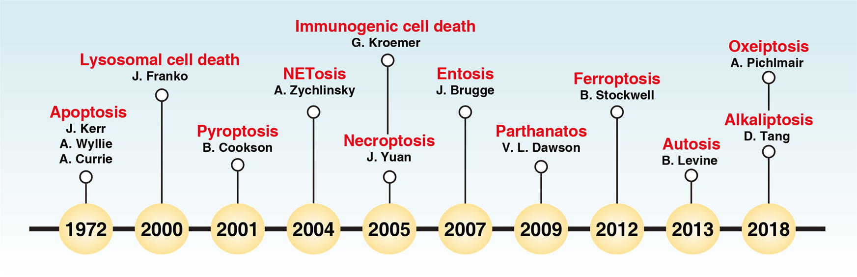 The Molecular Machinery Of Regulated Cell Death Cell Research