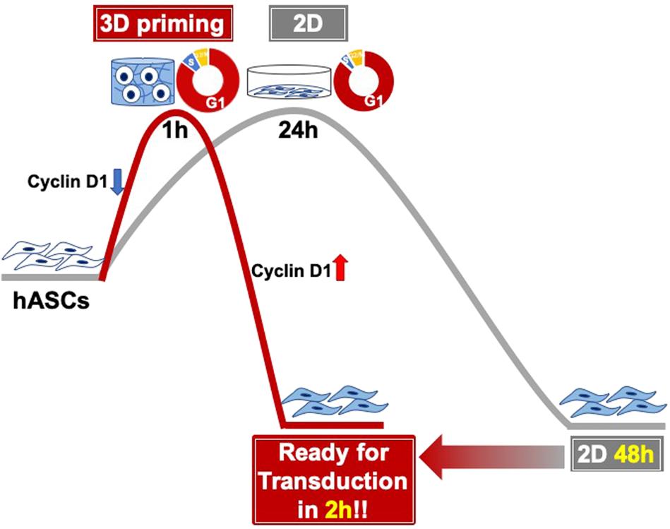 Three-dimensional microenvironmental priming of human mesenchymal