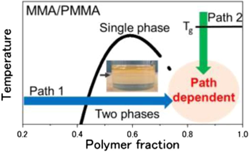 Phase separation during bulk polymerization of methyl