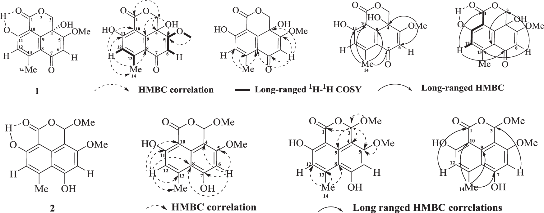 Hispidulones A and B, two new phenalenone analogs from desert plant en