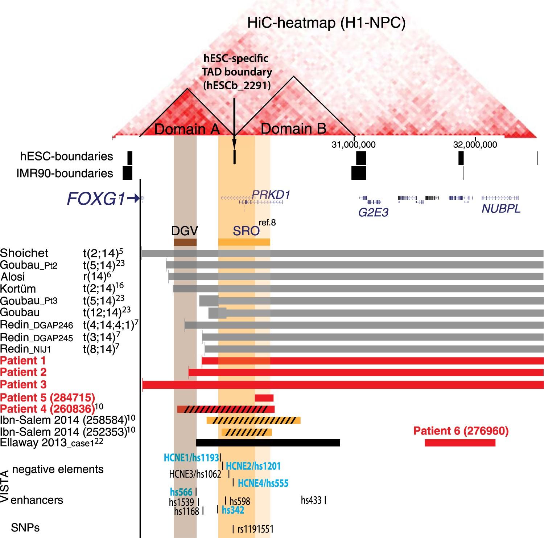 Regulatory Variants Of Foxg1 In The Context Its Topological Mouse Terminator X3 Domain Organisation European Journal Human Genetics