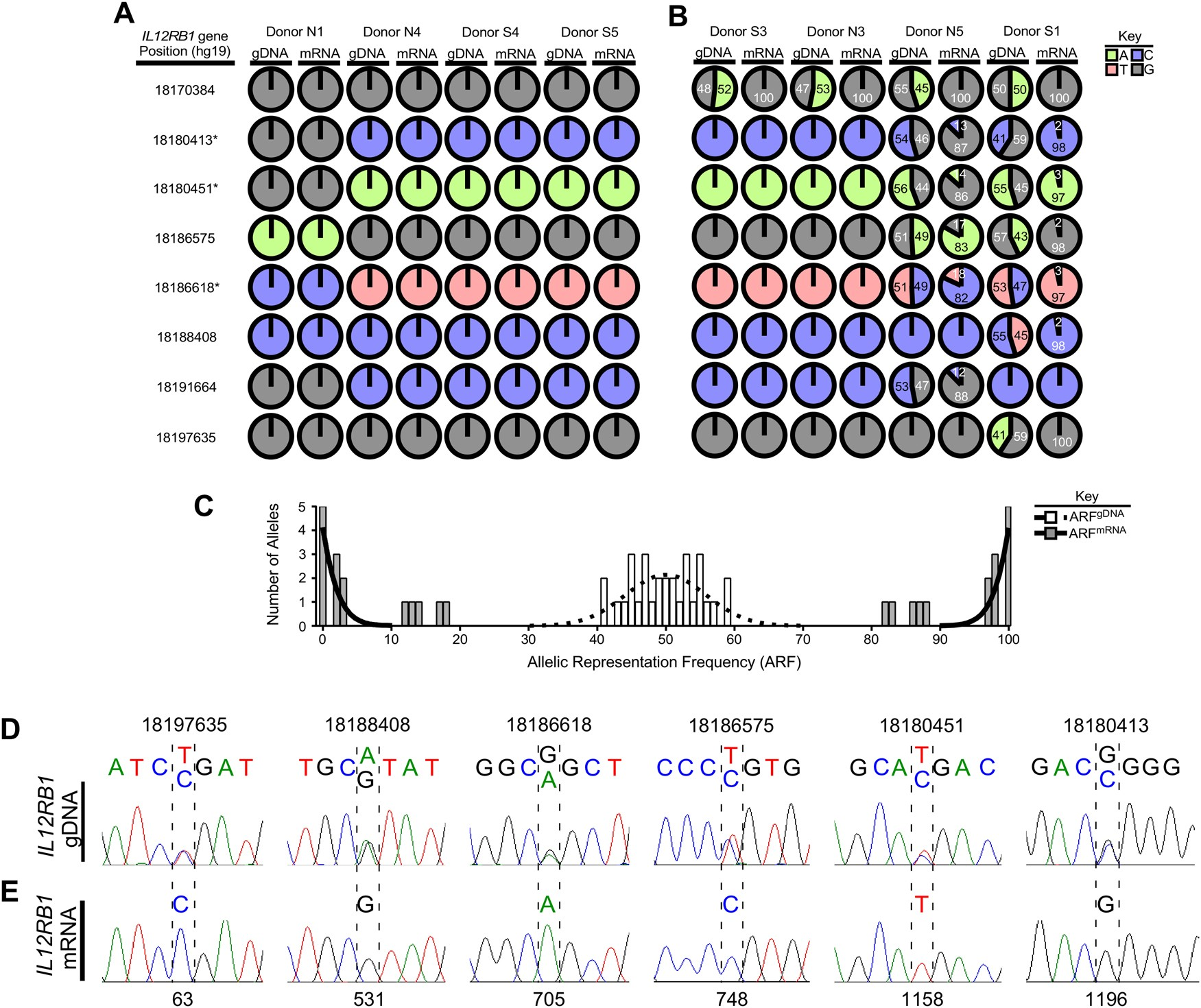 Human Il12rb1 Expression Is Allele Biased And Produces A Novel Il12 Variable Voltage Regulator Circuit With L200 Response Genes Immunity