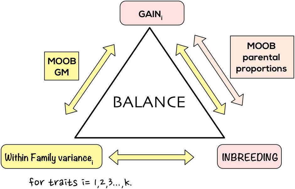 Multi-objective optimized genomic breeding strategies for