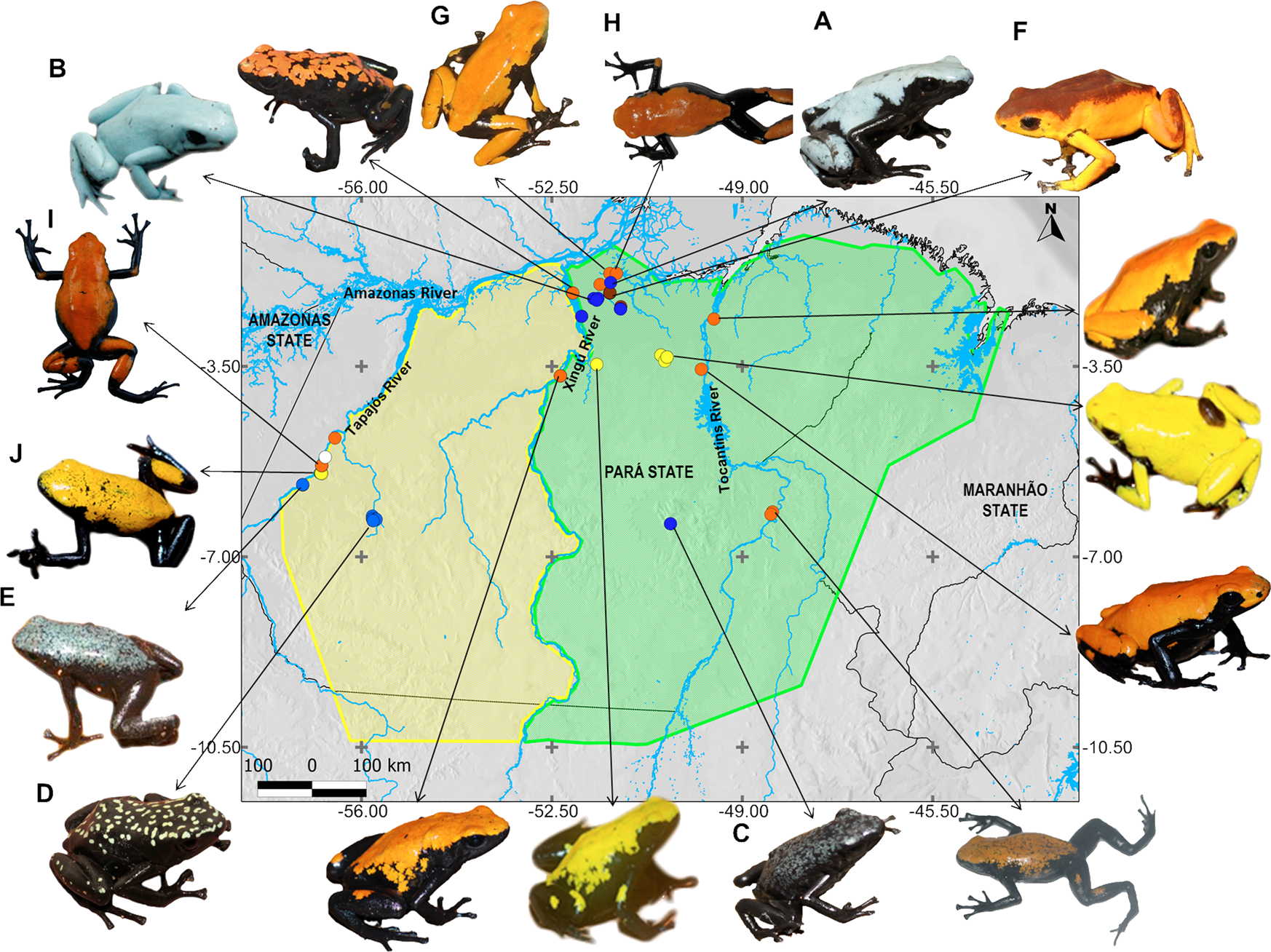 The evolution of polymorphism in the warning coloration of ...