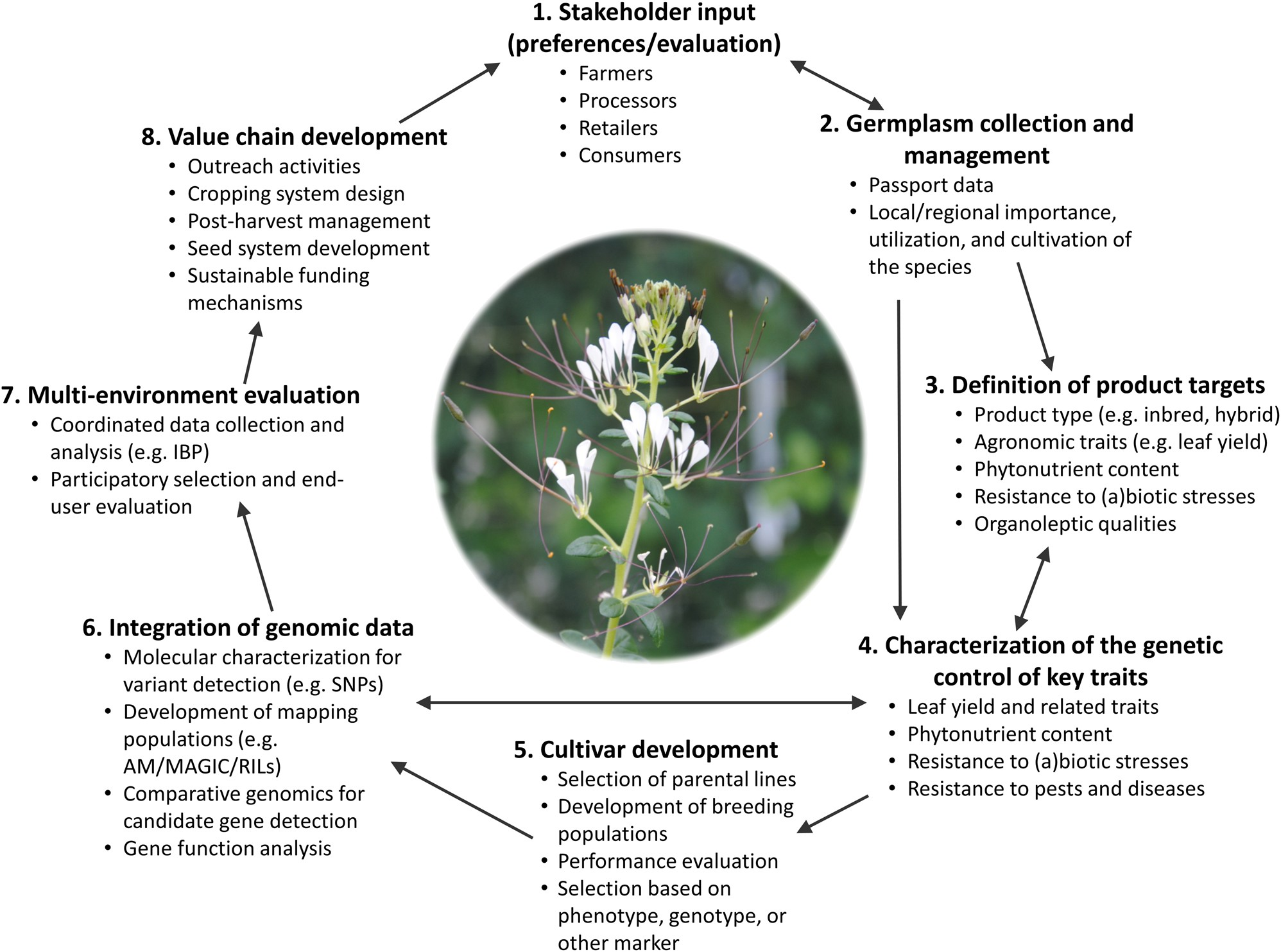 A roadmap for breeding orphan leafy vegetable species: a case study of  Gynandropsis gynandra (Cleomaceae) | Horticulture Research