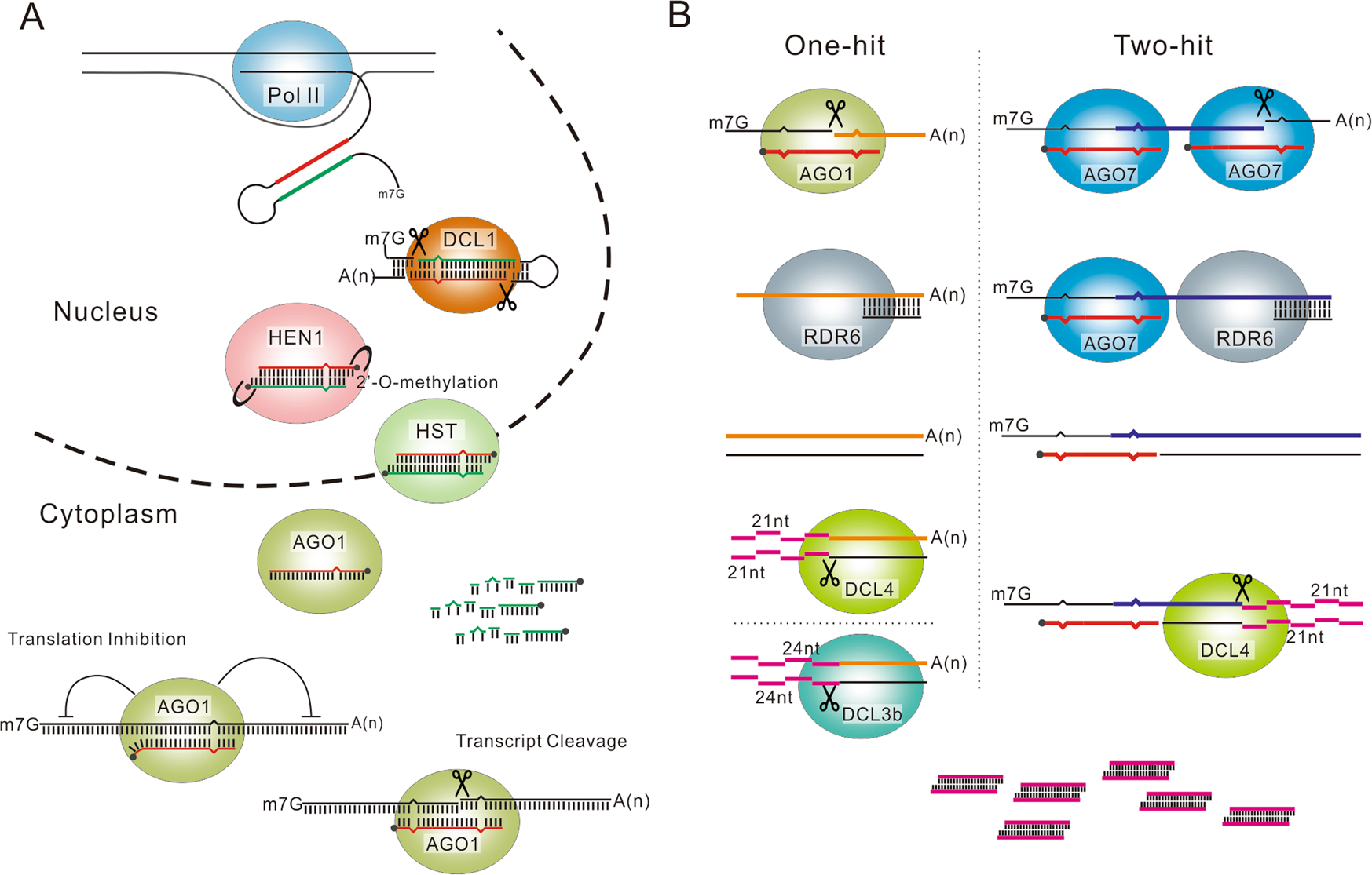 Small Rnas Emerging Regulators Critical For The Development Of