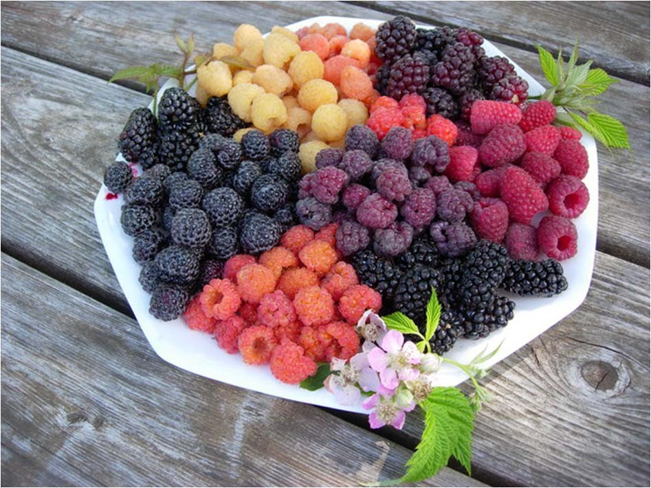 COMBINED S//H See Our Store! Heritage Red Raspberry Bush Seeds SWEET