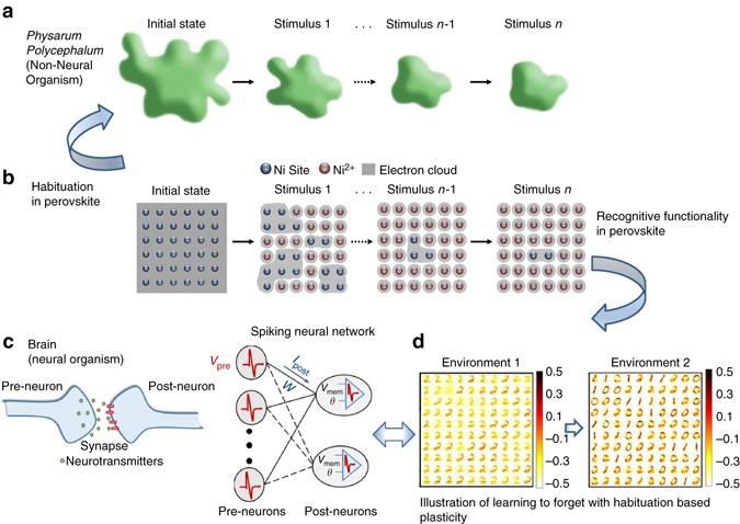 Habituation based synaptic plasticity and organismic