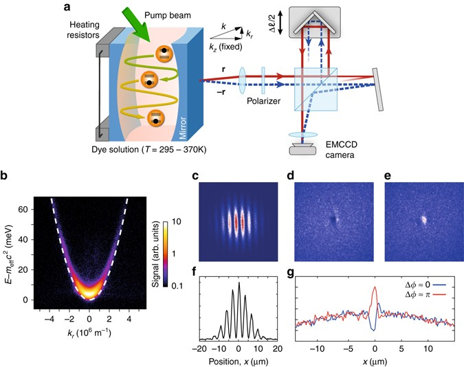 First-order spatial coherence measurements in a thermalized