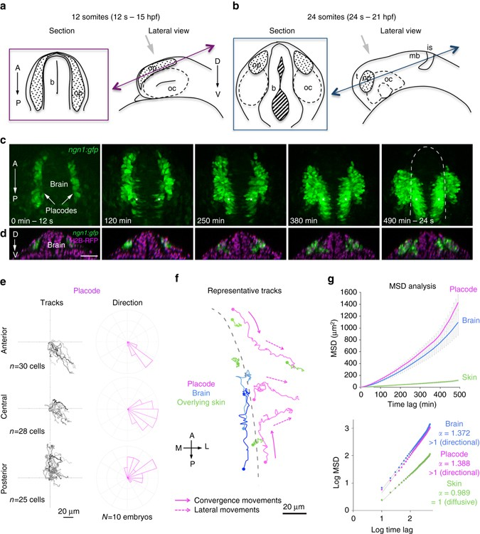 Extrinsic Mechanical Forces Mediate Retrograde Axon Extension In A