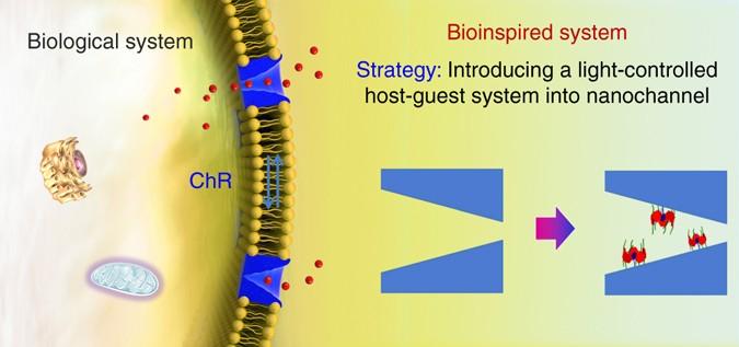 A light-regulated host–guest-based nanochannel system