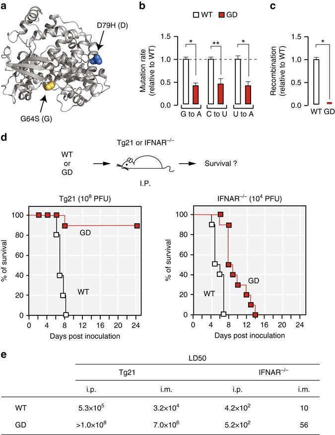 Poliovirus intrahost evolution is required to overcome