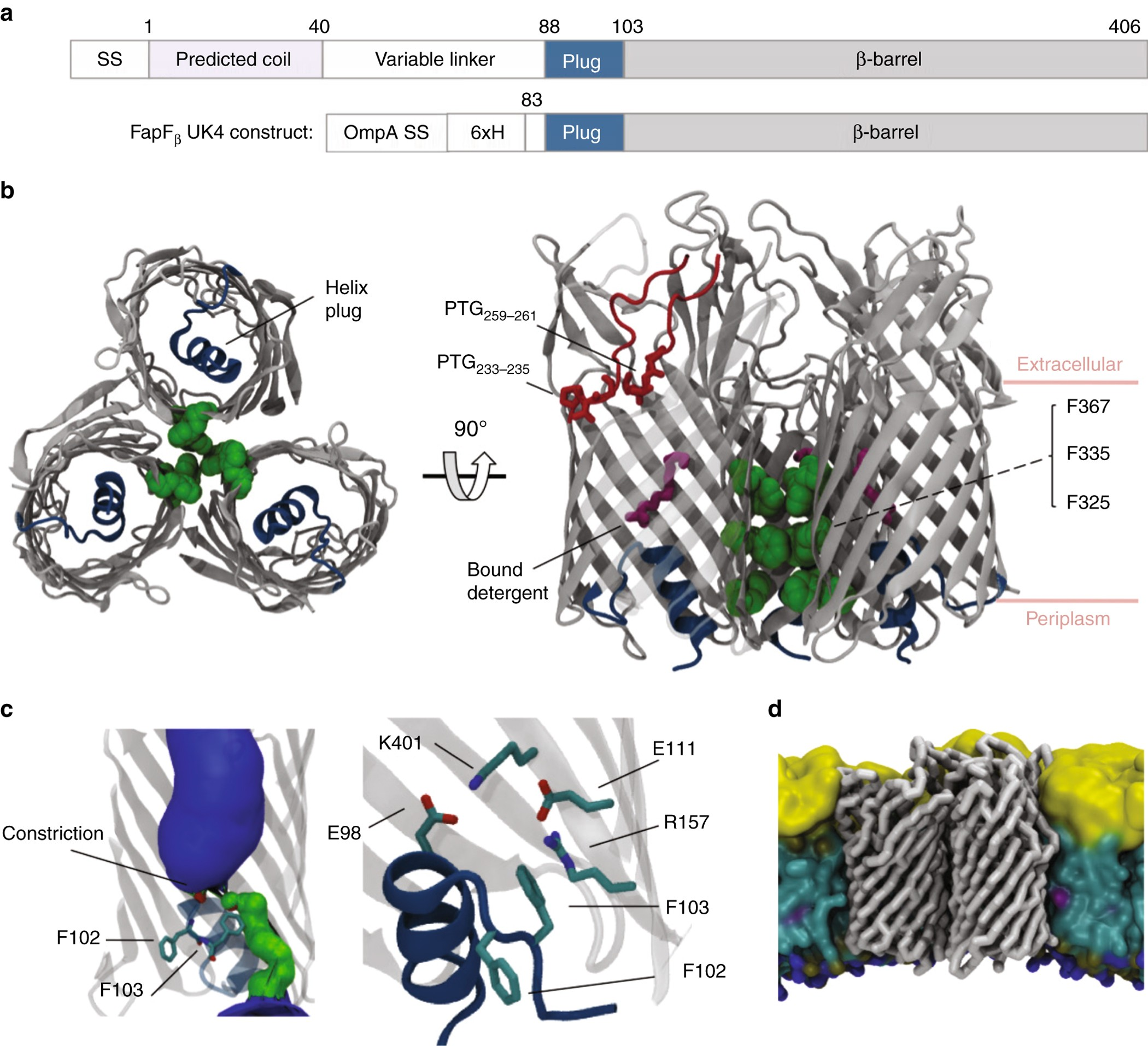 A new class of hybrid secretion system is employed in Pseudomonas