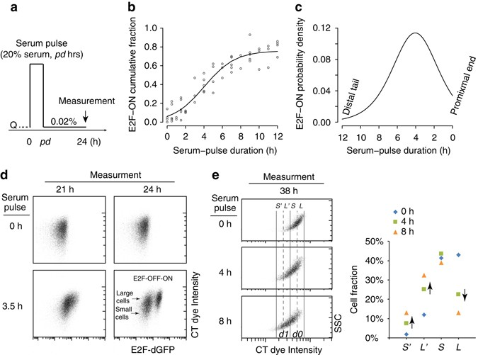 Exit from quiescence displays a memory of cell growth and division