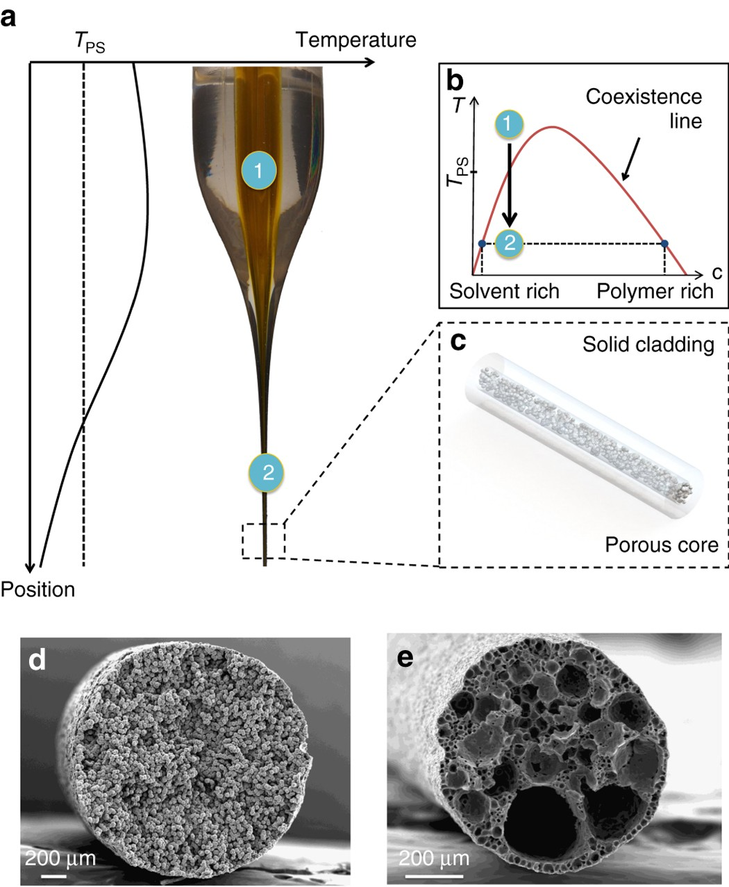 Thermally-drawn fibers with spatially-selective porous domains