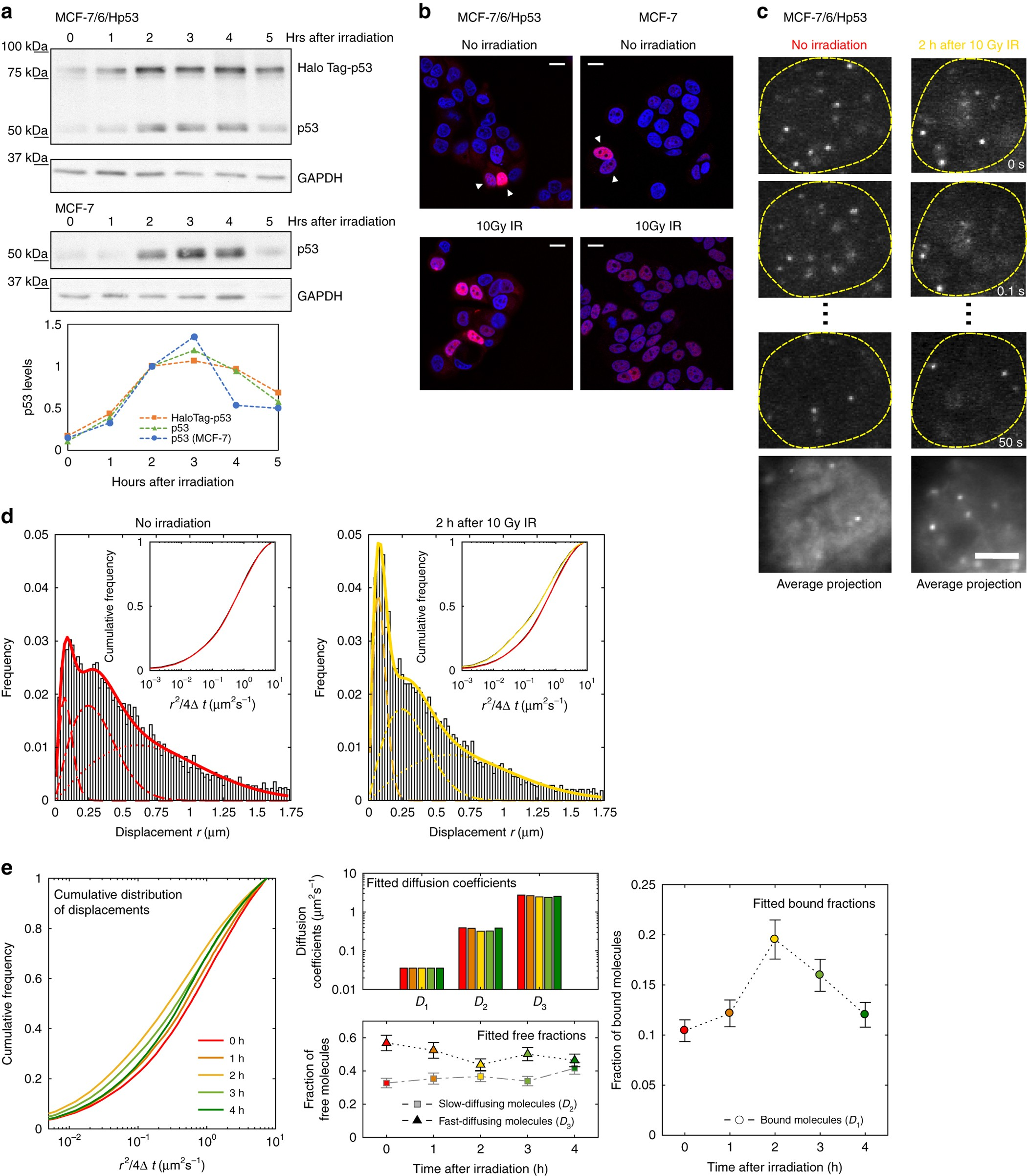 Live-cell p53 single-molecule binding is modulated by C