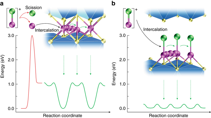Fast Kinetics Of Magnesium Monochloride Cations In Interlayer