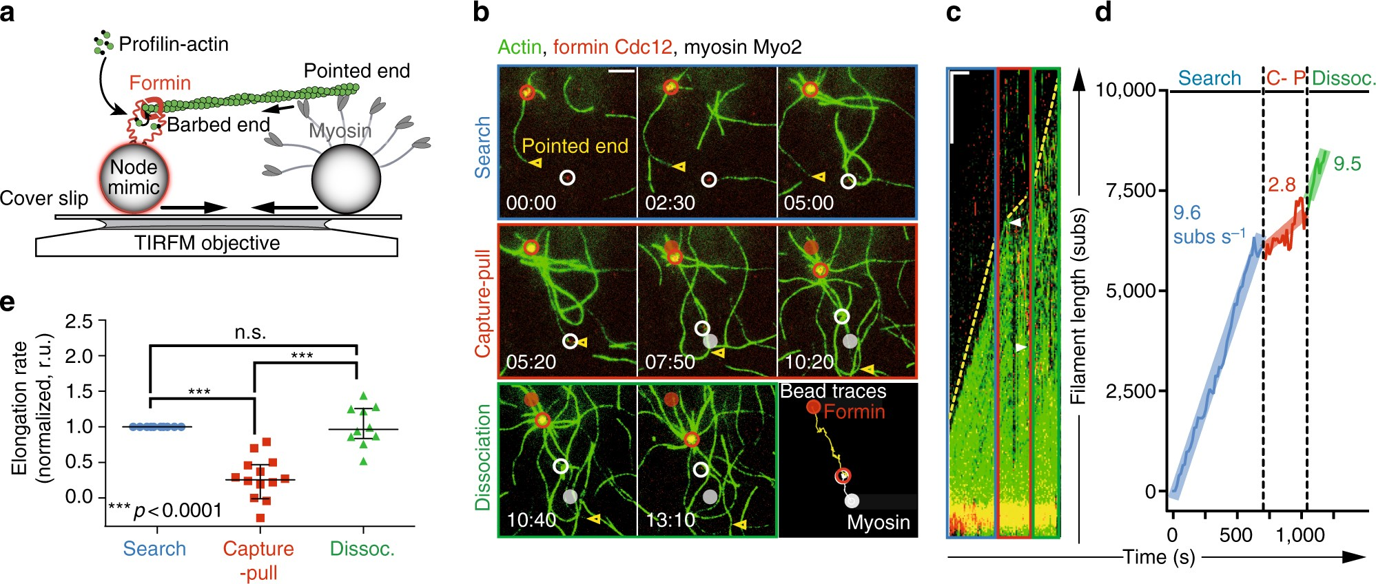 Mechanoregulated inhibition of formin facilitates contractile