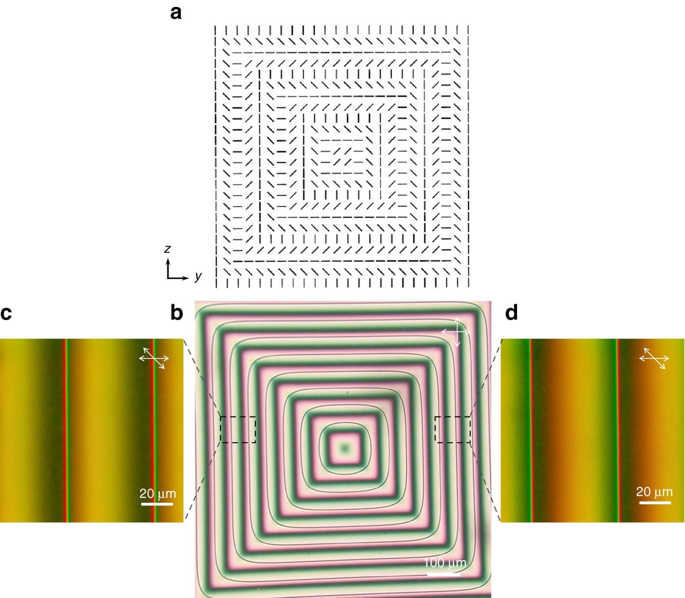 Artificial web of disclination lines in nematic liquid crystals