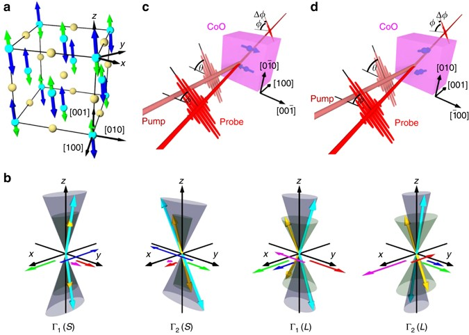 Excitation Of Coupled Spinorbit Dynamics In Cobalt Oxide By
