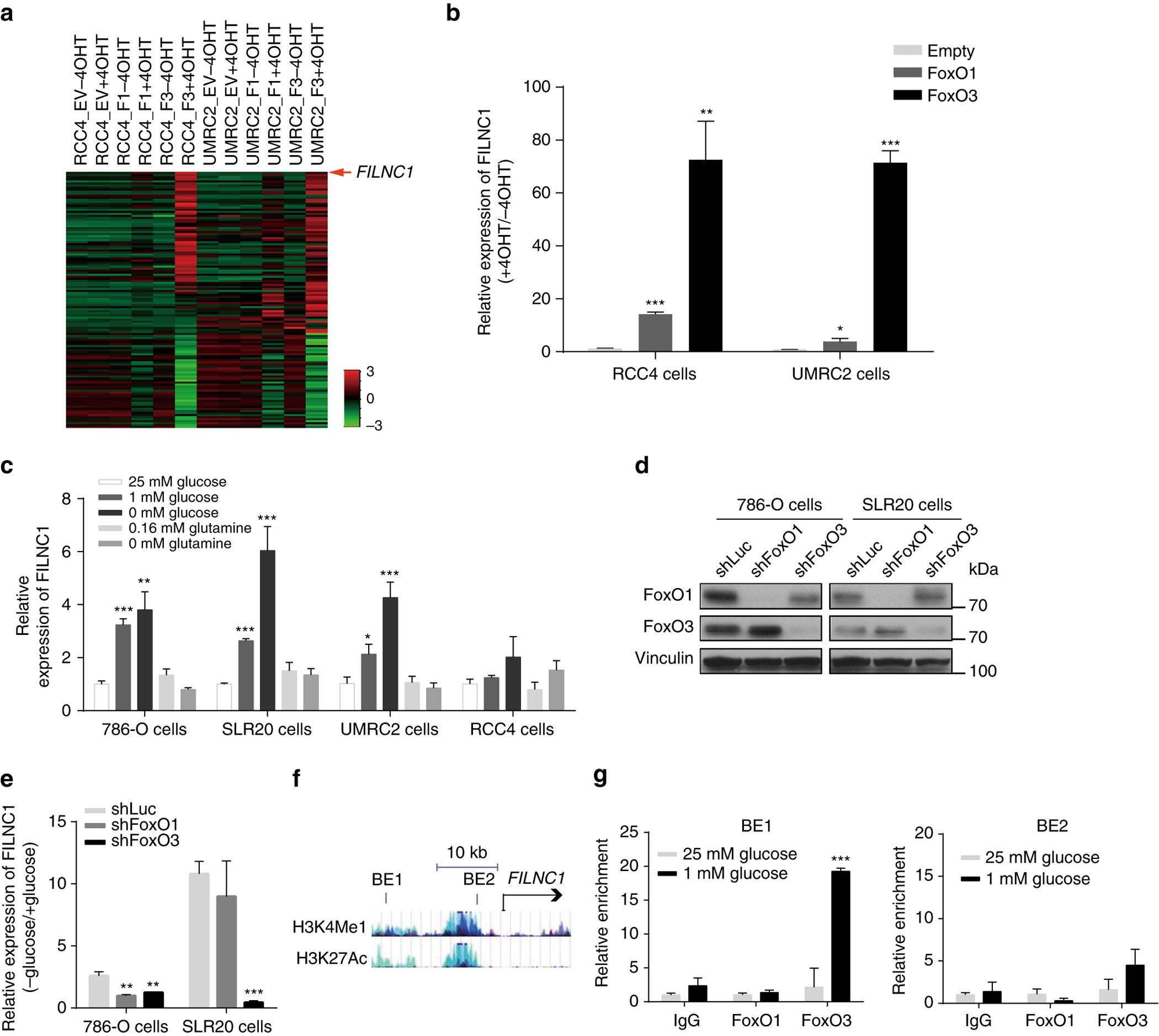 Energy Stress Induced LncRNA FILNC1 Represses C Myc Mediated Energy