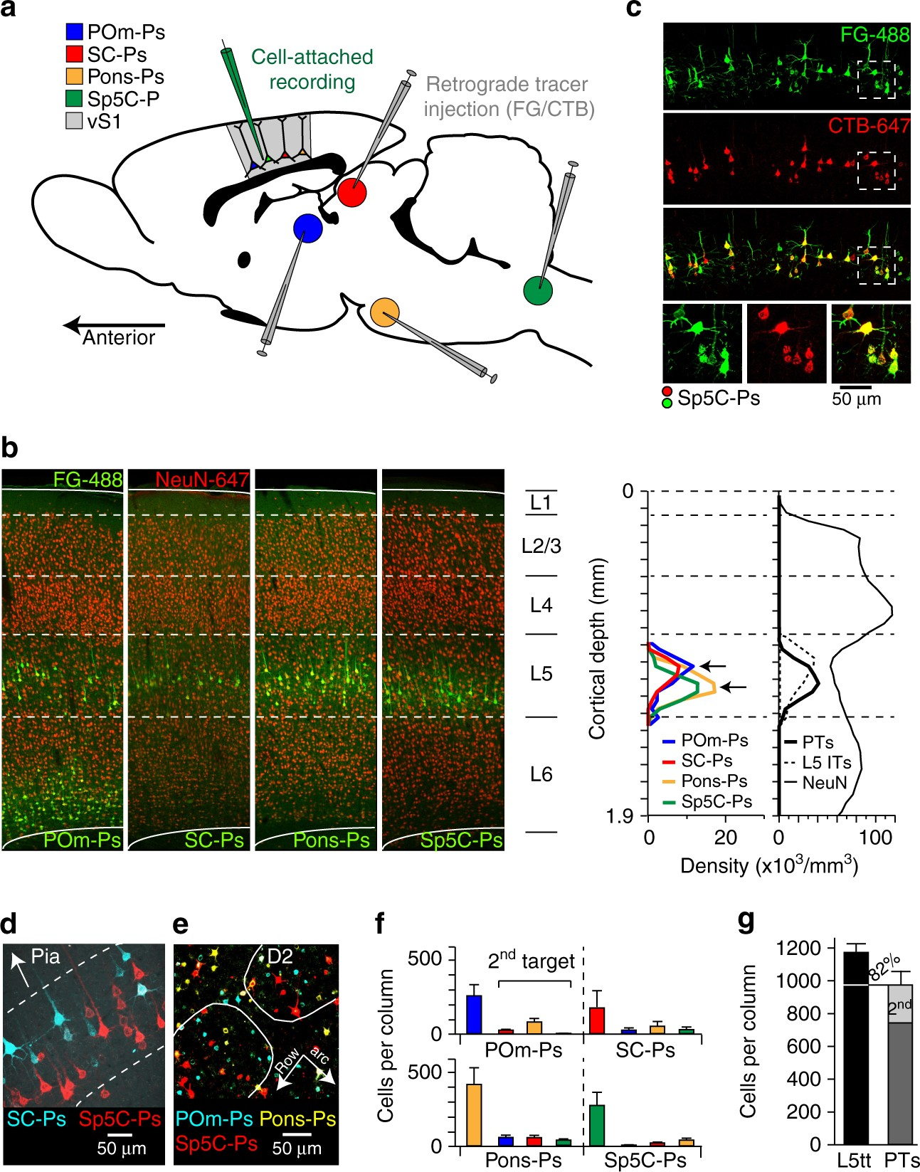 Relationships Between Structure In Vivo Function And Long Range