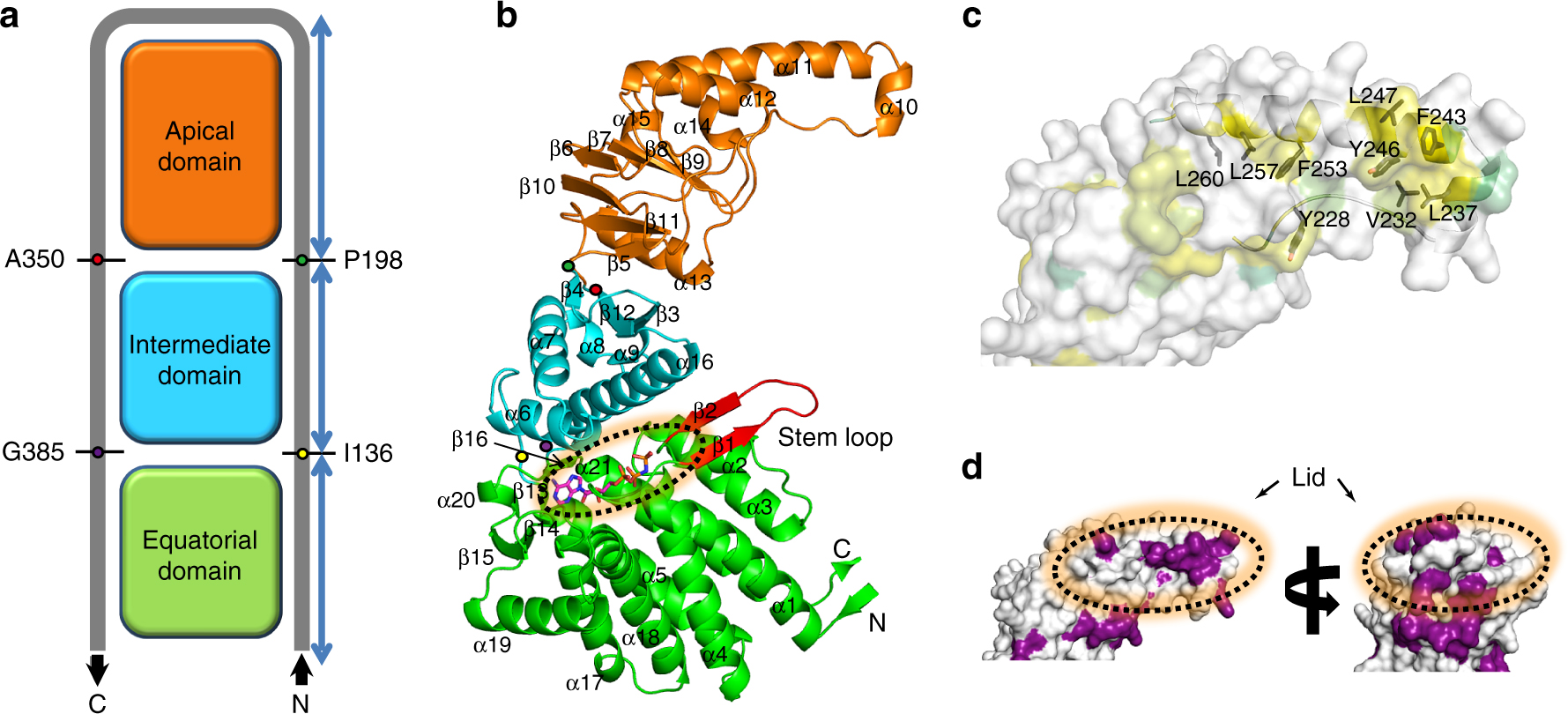 Structural and mechanistic characterization of an archaeal