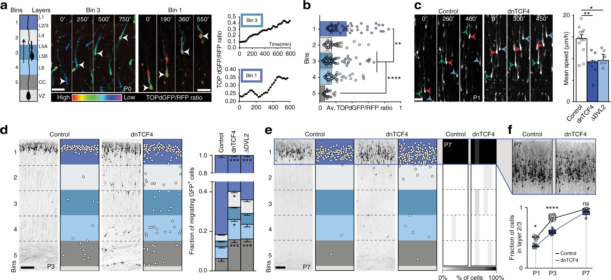 Perturbed Wnt Signaling Leads To Neuronal Migration Delay Altered Cable Tester Circuit Moreover Diagram Of A Schematic On Interhemispheric Connections And Impaired Social Behavior Nature Communications