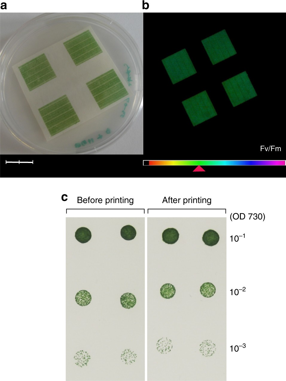 Electricity Generation From Digitally Printed Cyanobacteria Nature The Electric Circuits That Unit Which Converts Electrical Energy Communications
