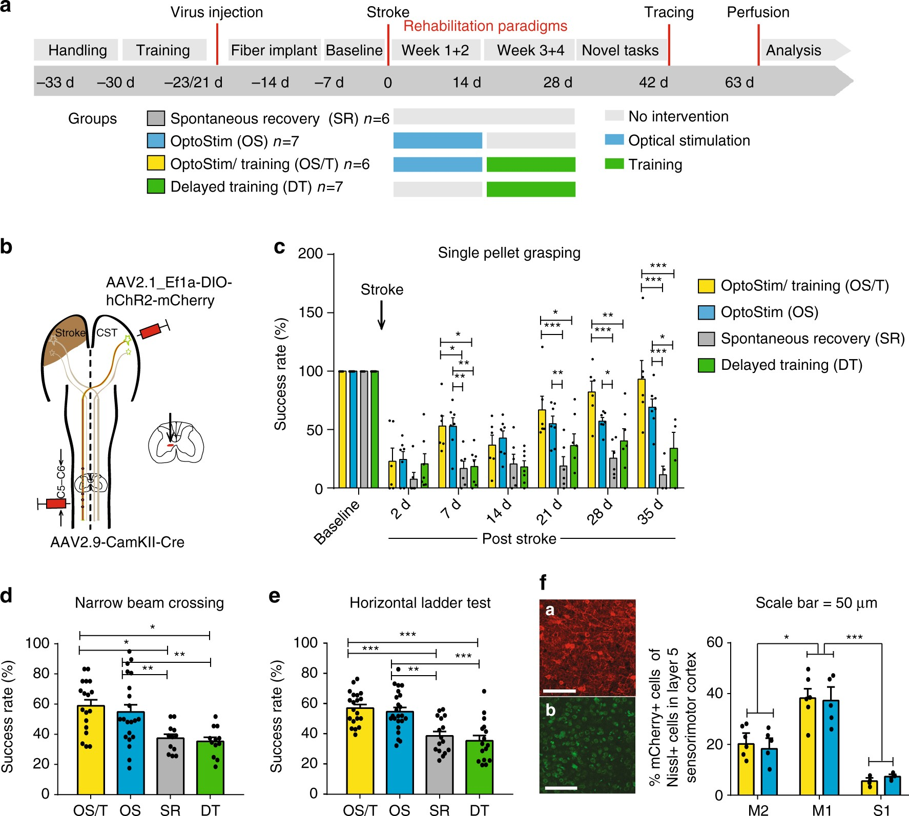 Optogenetically Stimulating Intact Rat Corticospinal Tract Post Describes The Basic Concepts Of Direct Current Dc Electrical Circuits Stroke Restores Motor Control Through Regionalized Functional Circuit Formation Nature