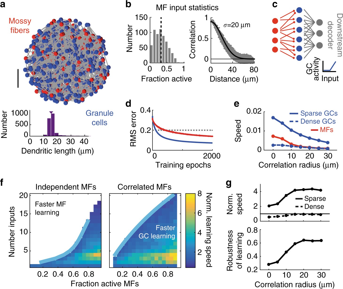 Sparse synaptic connectivity is required for decorrelation