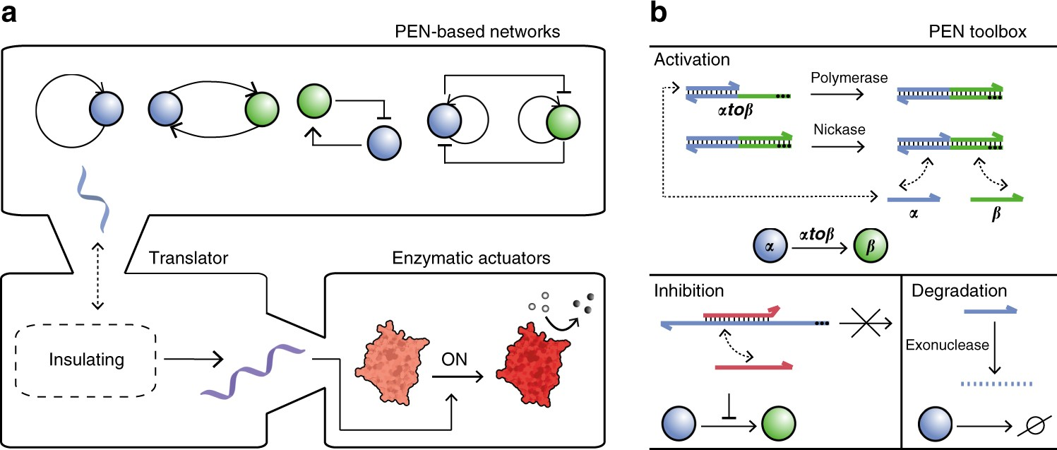 Hierarchical control of enzymatic actuators using DNA-based