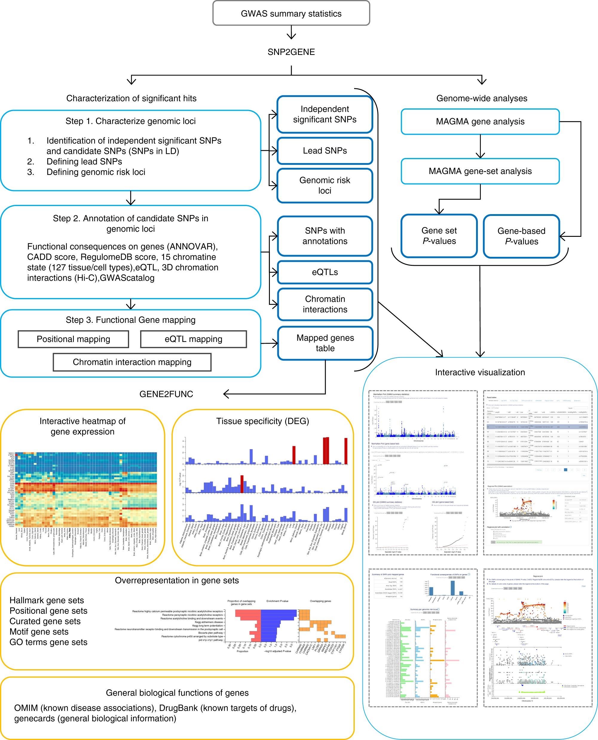 Functional mapping and annotation of genetic associations