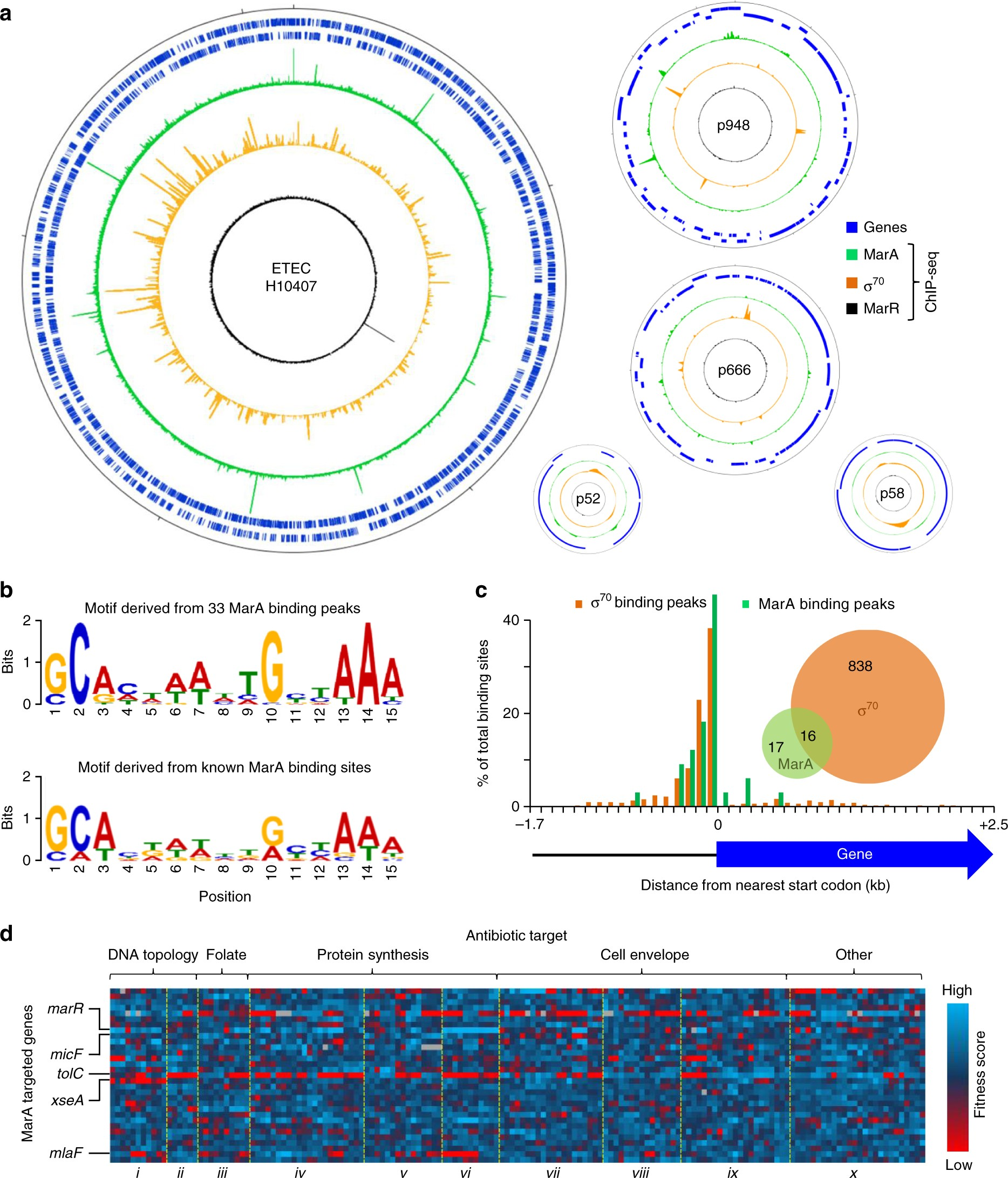 The multiple antibiotic resistance operon of enteric bacteria controls DNA repair and outer membrane integrity