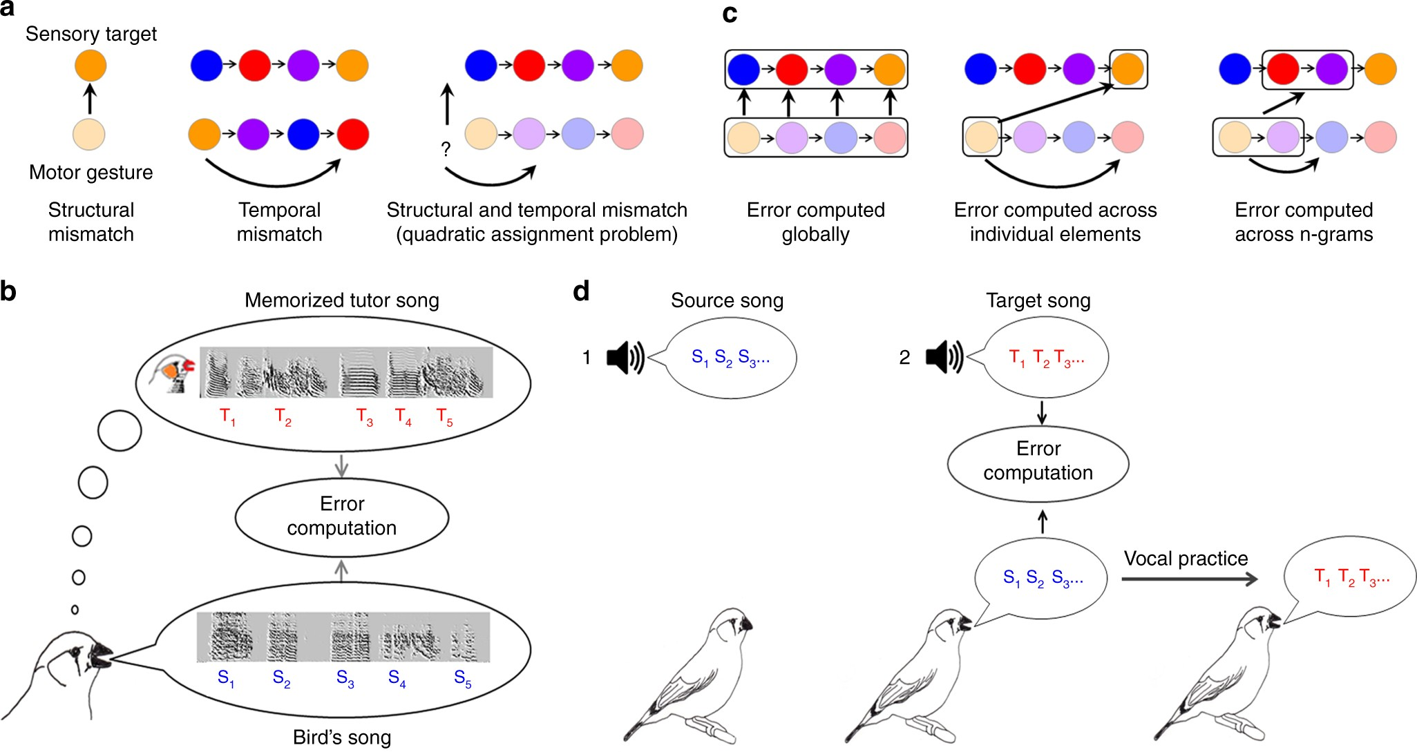 Songbirds work around computational complexity by learning song