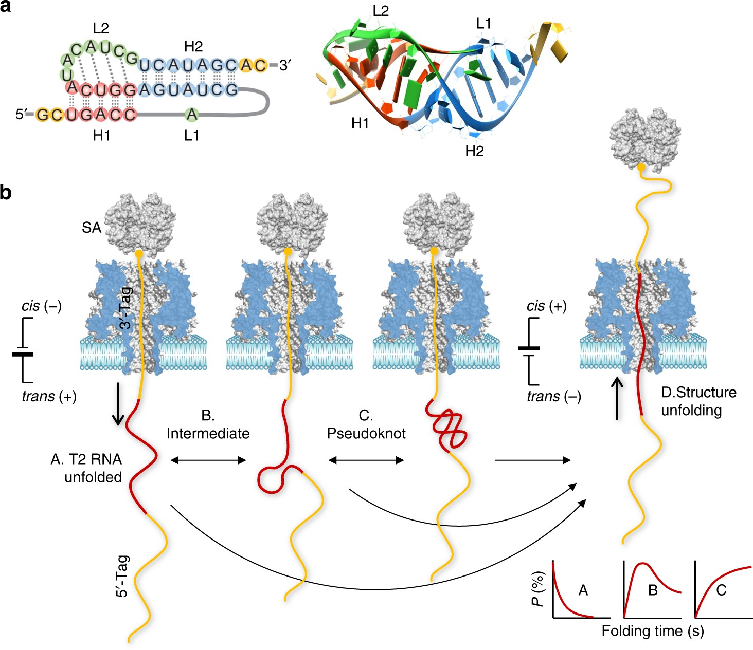 Nanopore Electric Snapshots Of An Rna Tertiary Folding Pathway 99 Electronic Toolbox 10 Combines Nature Communications