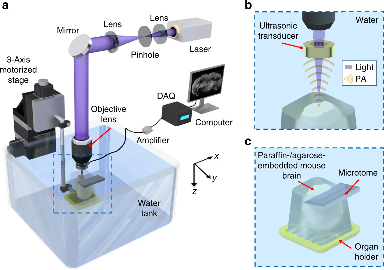 label free automated three dimensional imaging of whole organs by microtomy assisted photoacoustic microscopy nature communications