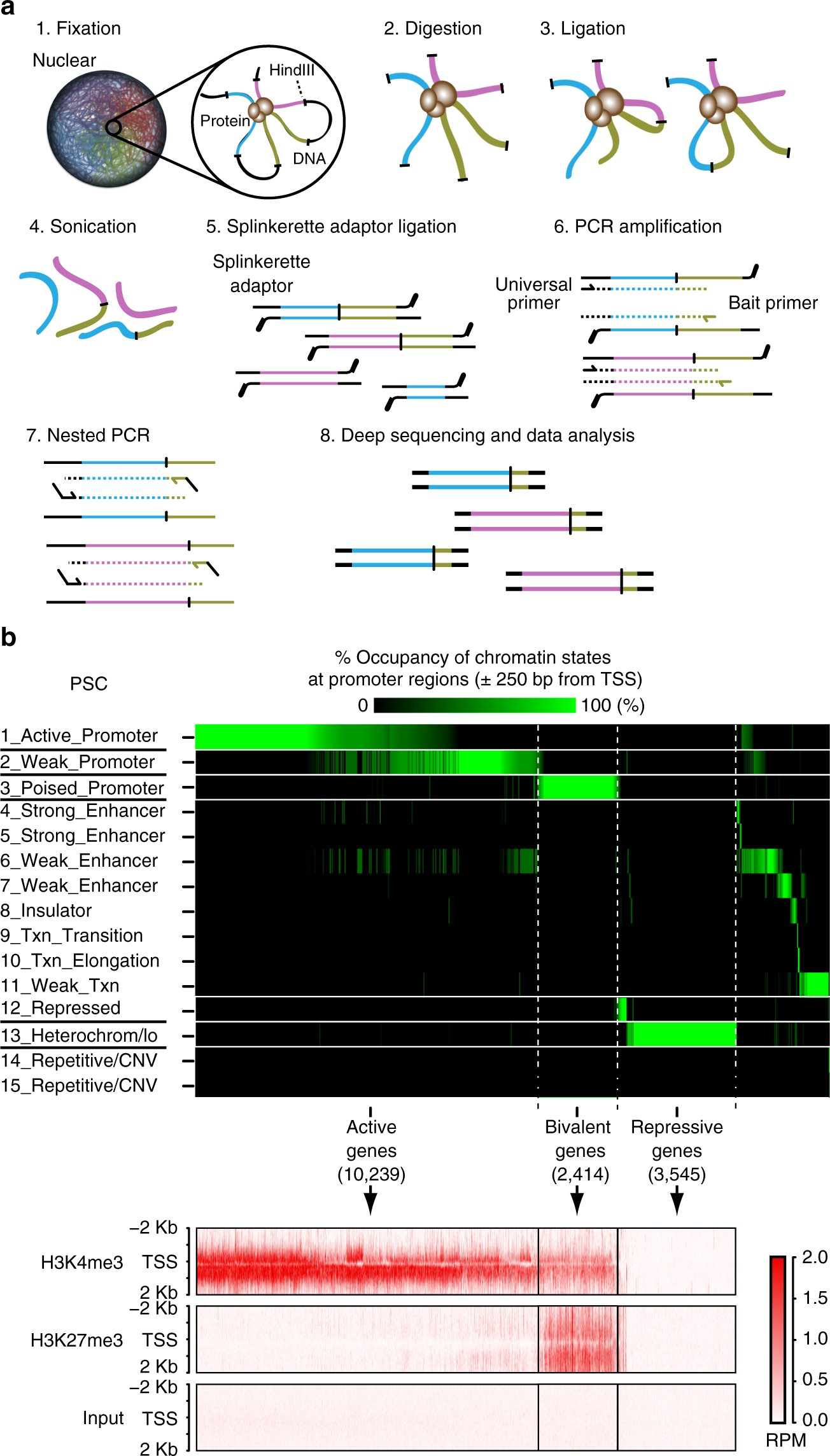 structural and spatial chromatin features at developmental gene loci
