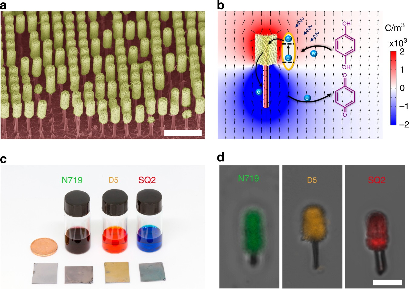 Orthogonal Navigation Of Multiple Visible Light Driven Artificial Look Through The Simulation Animation H Bridge Driver Circuit Microswimmers Nature Communications