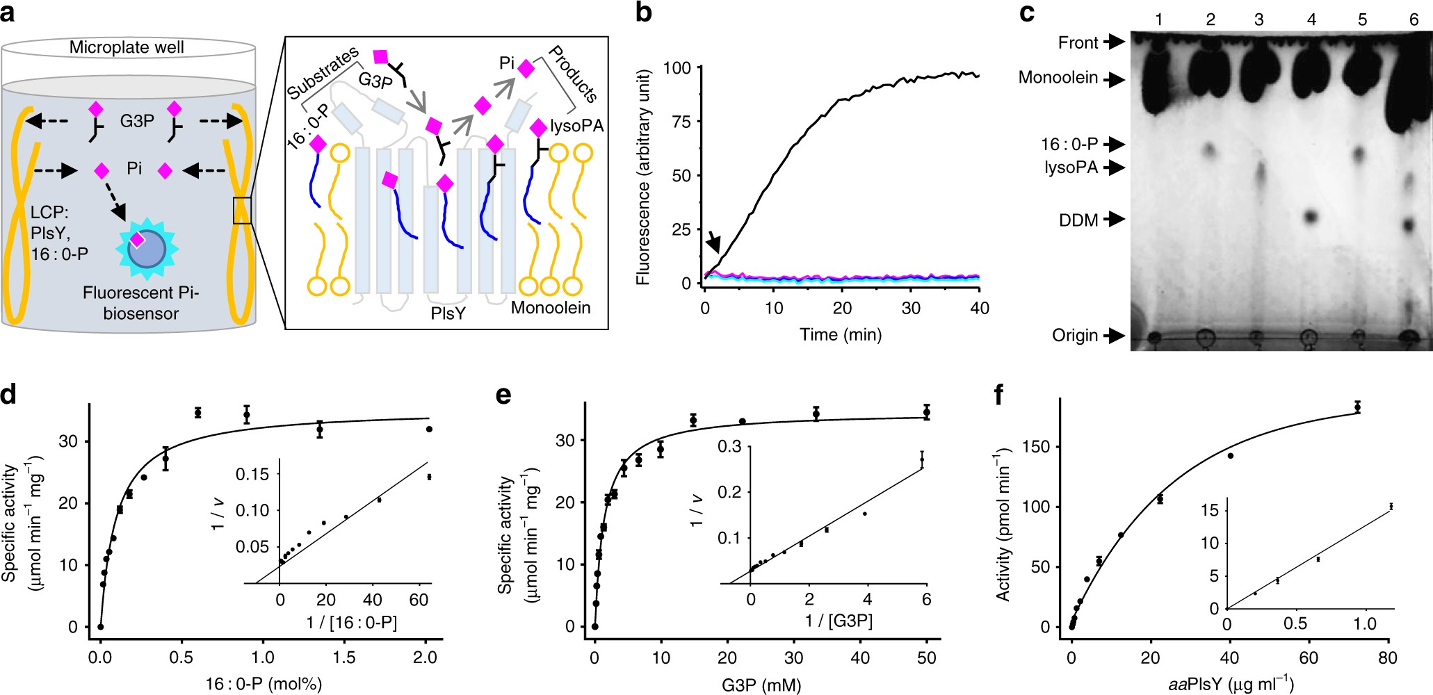 Structural Insights Into The Committed Step Of Bacterial Phospholipid Biosynthesis