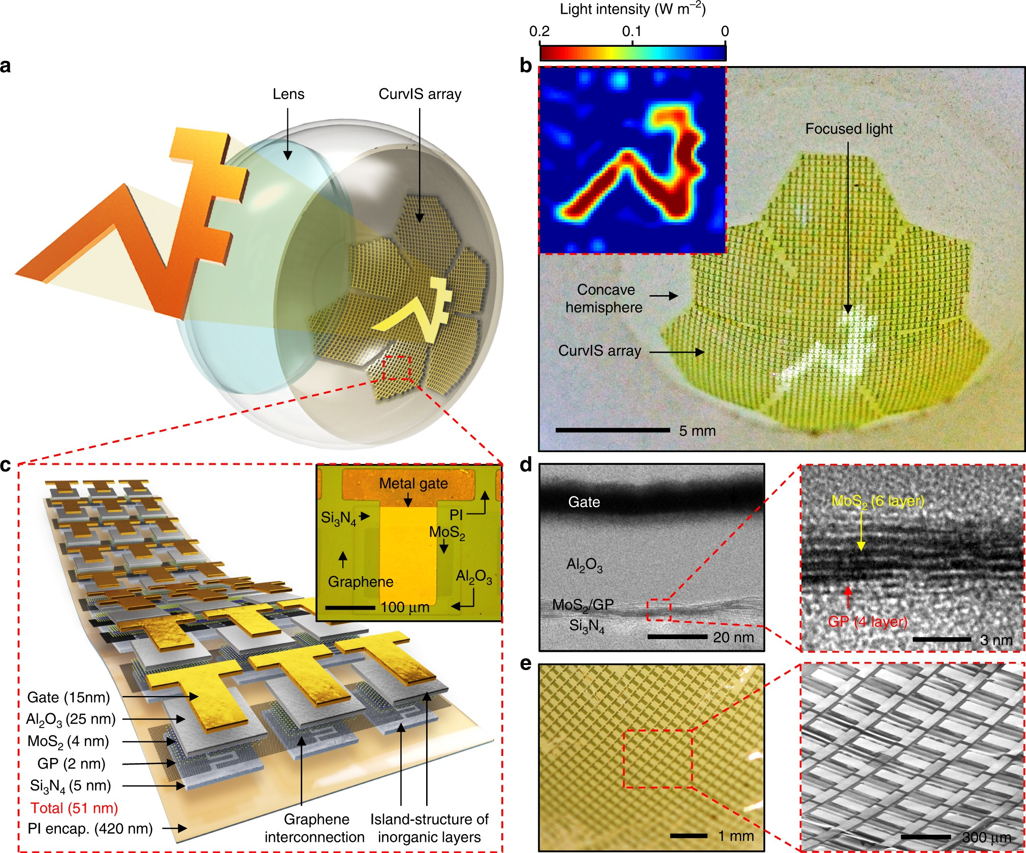 Human Eye Inspired Soft Optoelectronic Device Using High Density Mos Diagramoftheeye23 Diagram Picture 2 Graphene Curved Image Sensor Array Nature Communications