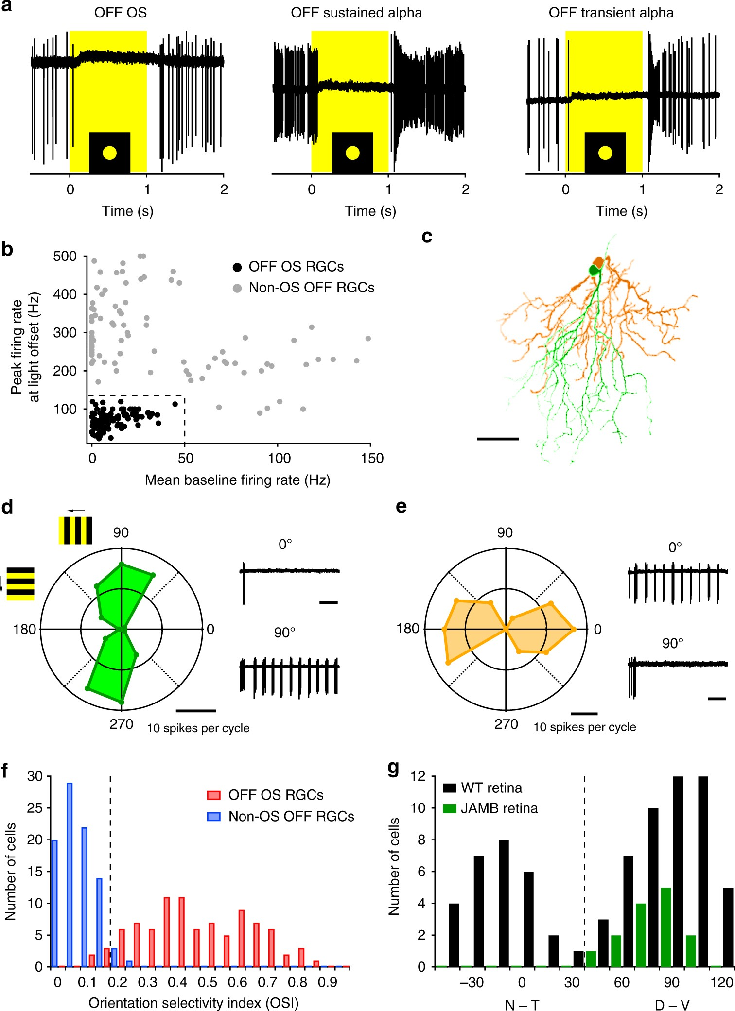 Electrical Synapses Convey Orientation Selectivity In The Mouse Wiring Diagram Symbols On Examine This Three Phase Motor Control Retina Nature Communications