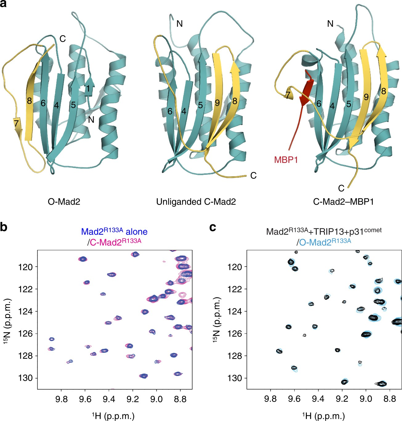 Mechanistic Insight Into Trip13 Catalyzed Mad2 Structural Transition 2000 Ford F 150 5 4l Engine Diagram And Spindle Checkpoint Silencing Nature Communications