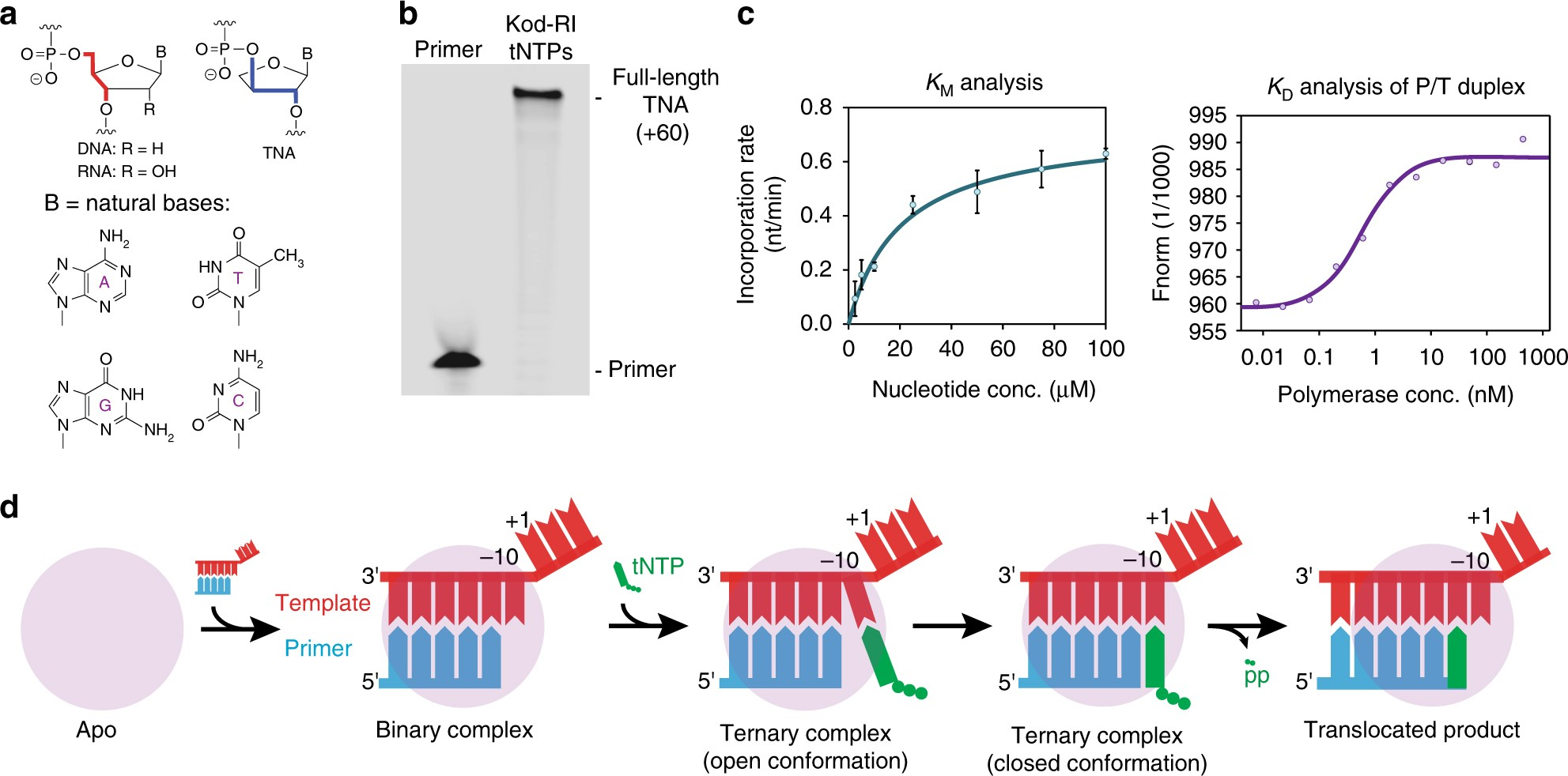 Structural basis for TNA synthesis by an engineered TNA polymerase