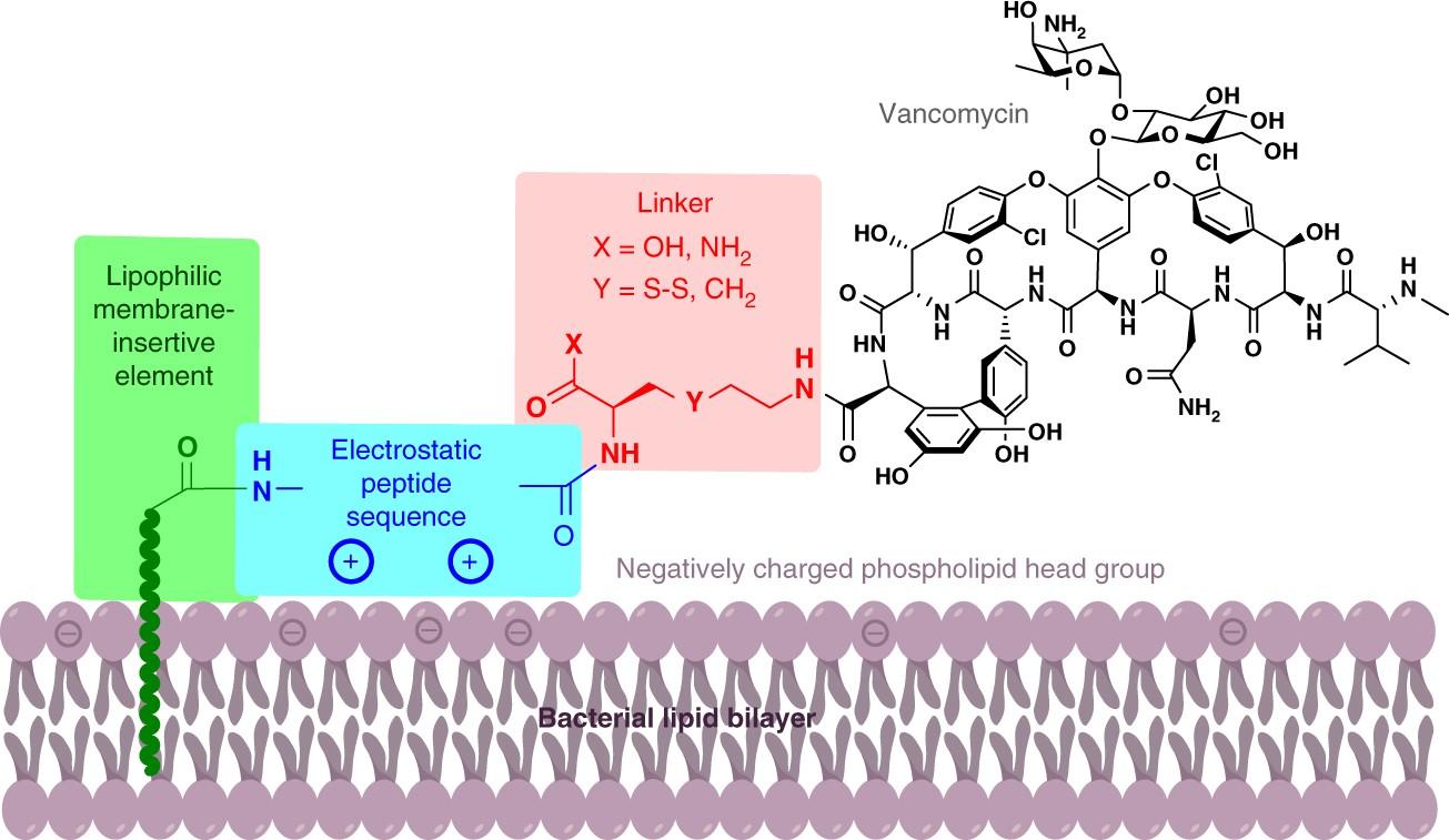 Protein Inspired Antibiotics Active Against Vancomycin And Tween 20 Polysorbate 1kg Daptomycin Resistant Bacteria Nature Communications