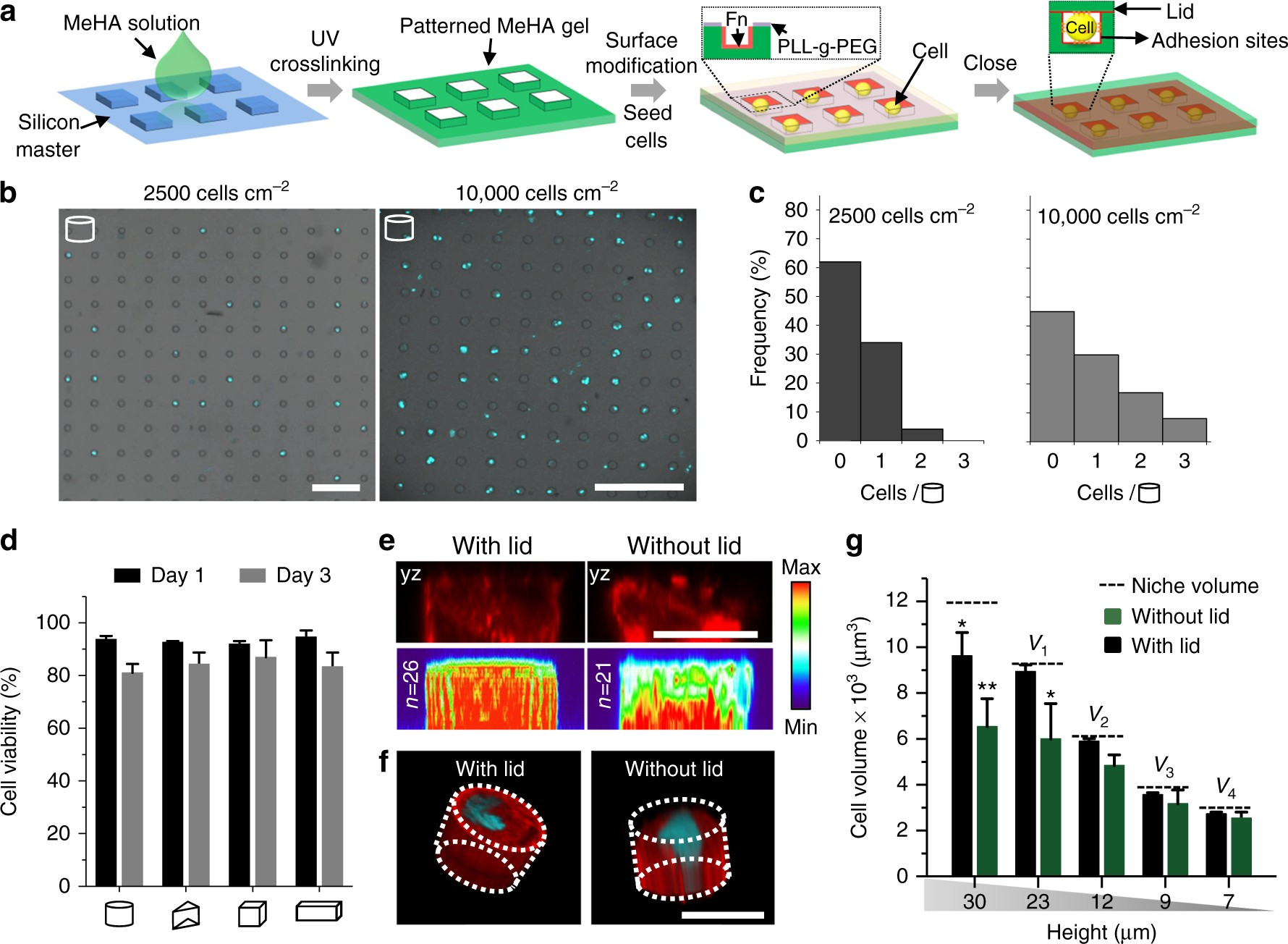 3D microniches reveal the importance of cell size and shape