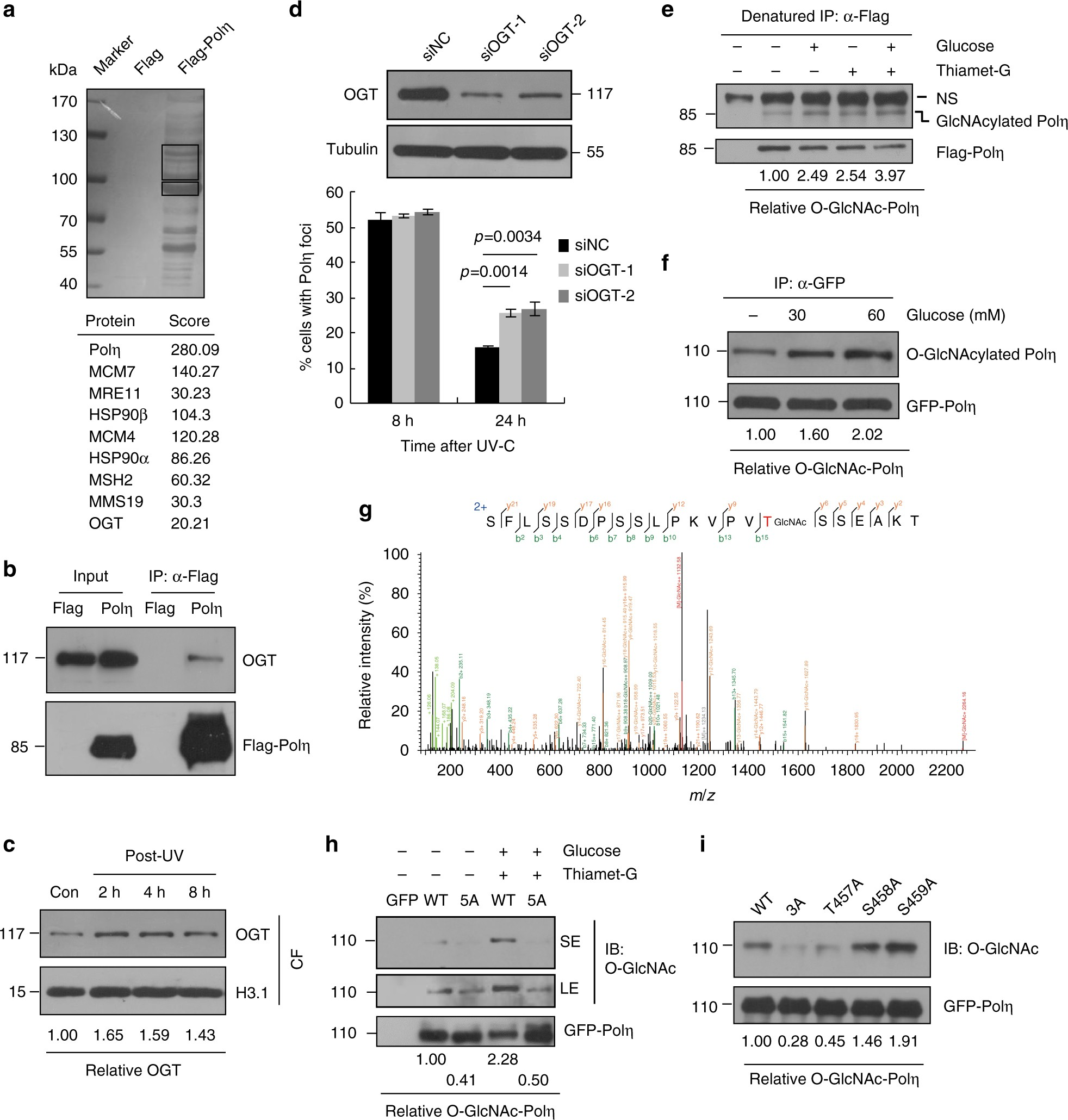 Polη O GlcNAcylation governs genome integrity during translesion DNA