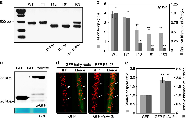 An Oomycete Plant Pathogen Reprograms Host Pre Mrna Splicing To Subvert Immunity Nature Communications