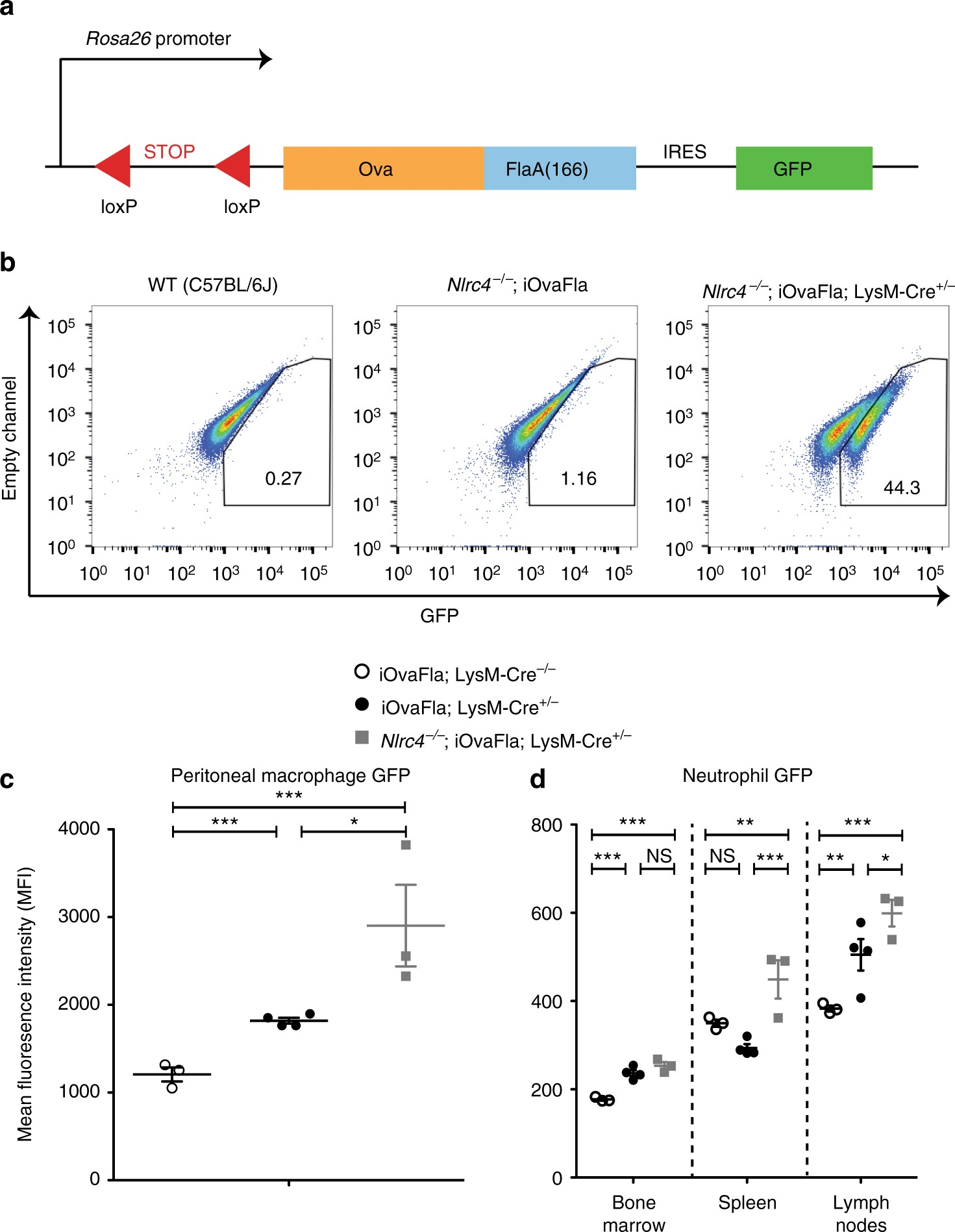 naipnlrc4 activation in mrp8 cells is sufficient to cause systemic disease nature